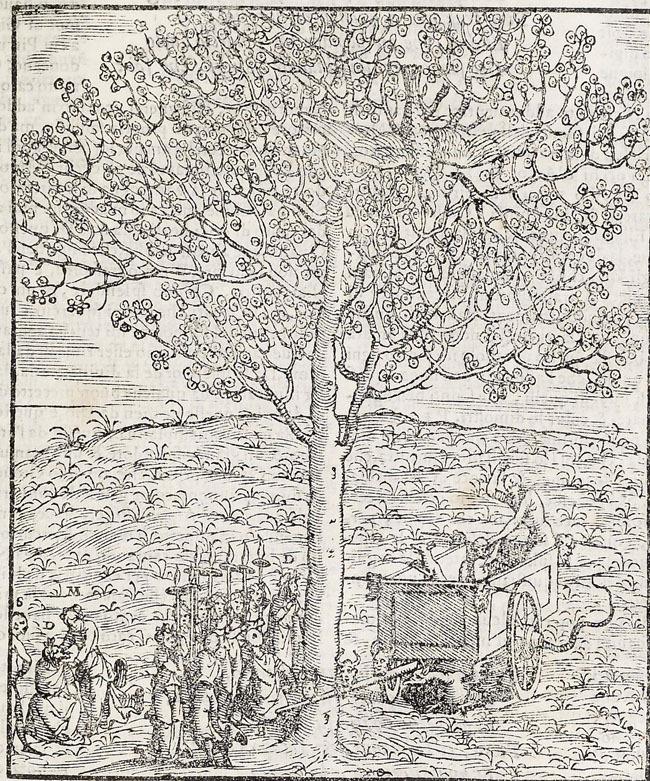 Vellutello, Renewal of Tree